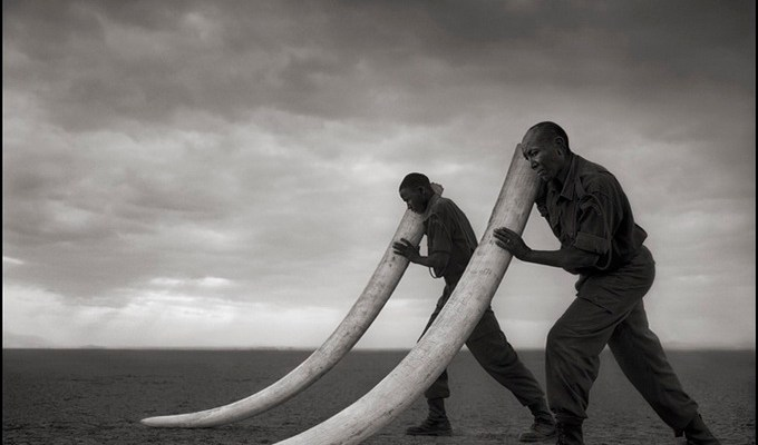 Rangers Supporting Tusks, Amboseli 2011