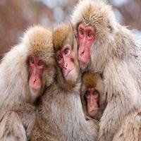 Animal-Photography-171-610x381