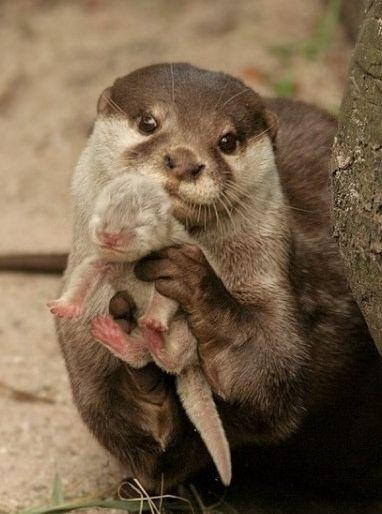 To give the Lesh family privacy, we are not sharing any pictures right now. Except The Otter One