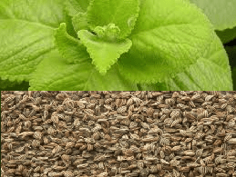 Ajwain leaves