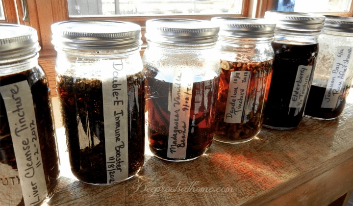 Make Your Own Herbal Tinctures At Home, Bulk Herb Store, Shoshanna Easling, teas, herbal remedies, lost healing arts, preparing remedies, vinegar tincture, shelf life, pregnant mothers, echinacea, elderberry, nettle, peppermint, eluthero, ginseng, vodka tincture, medicinal herbs, steeping herbs, DIY, herbal health, healthy living, sustainable lifestyle, alternative medicine, homemaking,