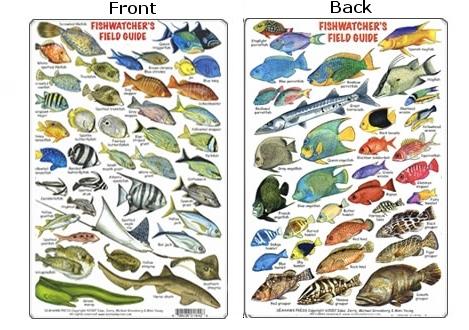 Tropical Fish Species Identification