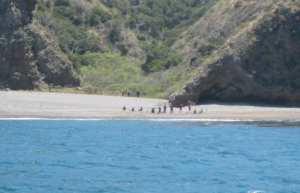 Santa Cruz Island migrants