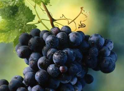 El poder de las uvas en tu piel