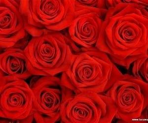 Coleurs Nature y la esencia de rosa