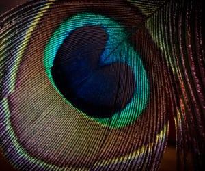 DIY manicura de pavo real, pon una pluma en tus uñas
