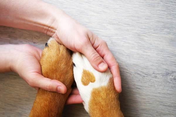Einzel Training – Für Hunde mit besonderen Bedürfnissen