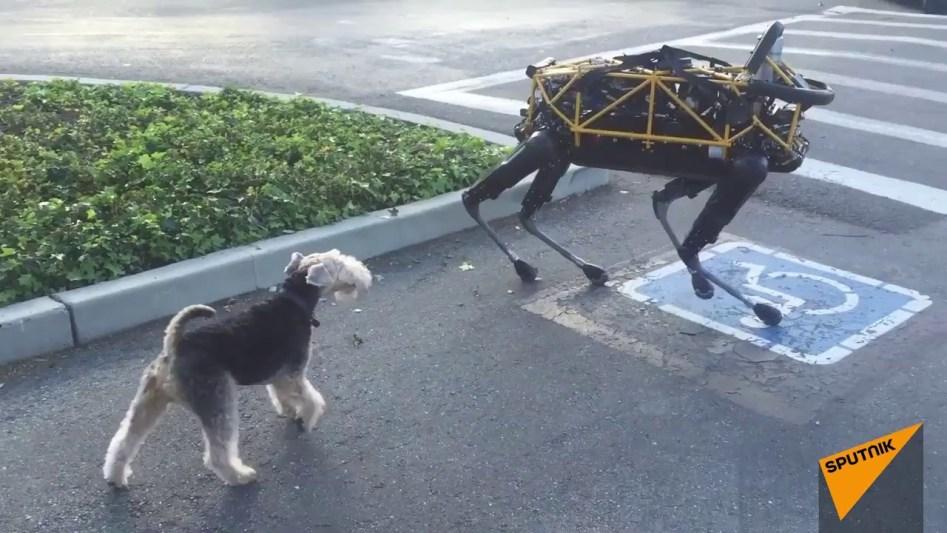 Echter Hund trifft auf Boston Dynamics Roboter-Hund
