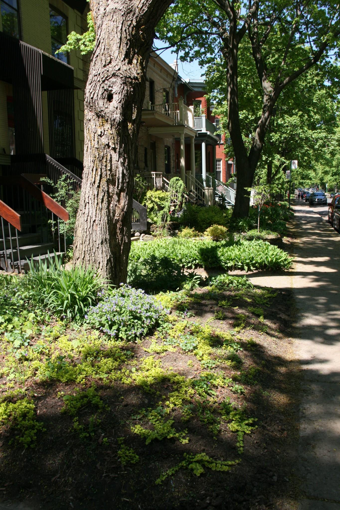 Outremont à Montréal