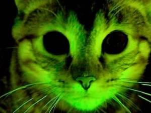 orina de gato brillante