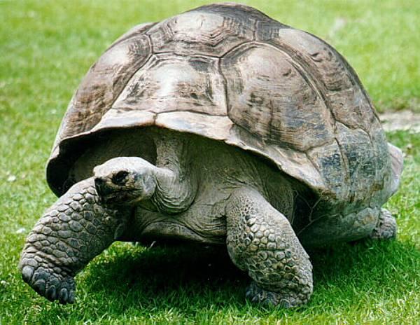 día-mundial-de-la-tortuga