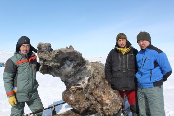 mamuts-de-yakuts