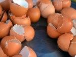 cáscaras de huevo