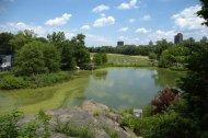 Central Park VII