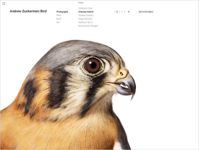 birdbook02