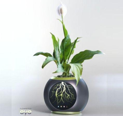 eye flowerpot
