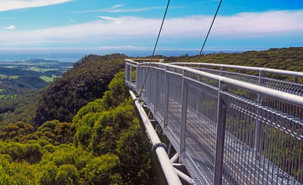 Illawarra Fly Tree Top Walk