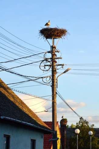 Storks in Romania