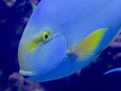 Maui, Hawaii, tropical fish