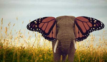 elephant-butterfly-5