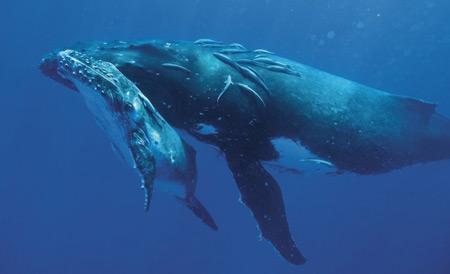 whale1-640x389