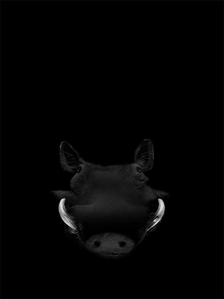 owen-animals-(2)