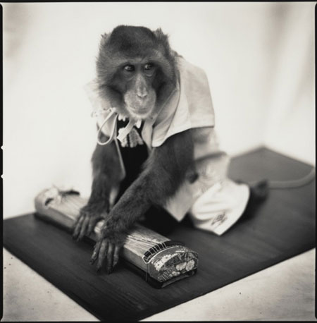Monkey-Series-14-640x652