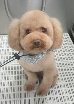Small Of Teddy Bear Cut