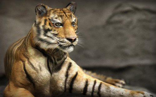 Tiger in The Ultimate Collection Of Maya 3D Tutorials