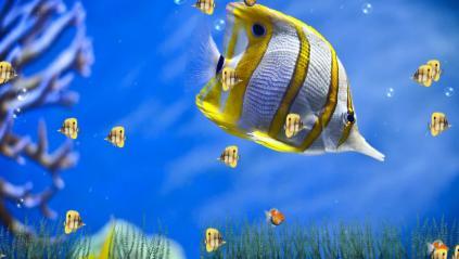 Marine Life Aquarium Animated Wallpaper Preview