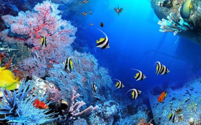 3d Aquarium Wallpapers Free Download. Download Fish Tank 3d Live ... Desktop Background