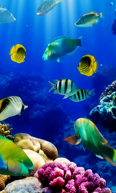 3d Live Fish Wallpapers Fish Tank Live Wallpaper. Fish Tank 3d Live ... Desktop Background