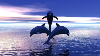 3 DOLPHINS JUMPING OUT OF THE WATER WALLPAPER ( Desktop Background