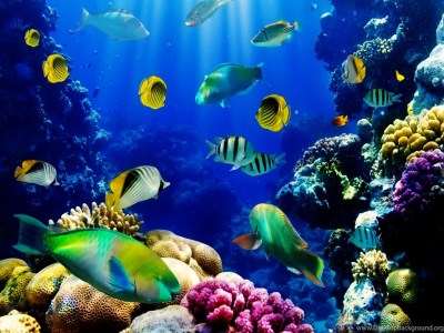 3d Live Fish Wallpapers Fish Tank Live Wallpaper. Fish Tank 3d Live ... Desktop Background
