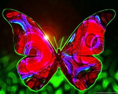 Coolest Looking Butterfly Desktop Background
