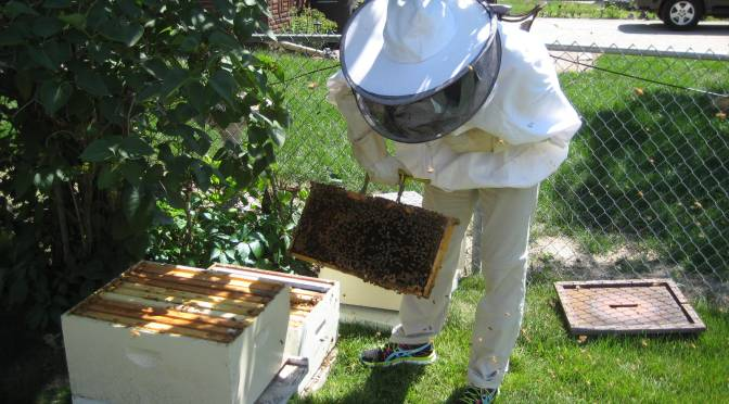 Des Moines backyard beekeepers