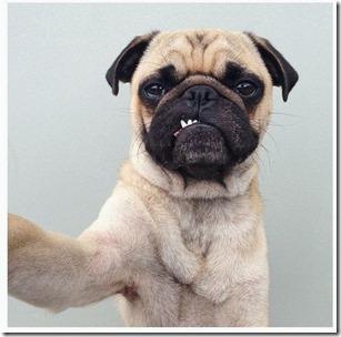 perrito selfie