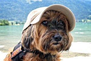 What Happens To Your Pet When Your On Vacation?