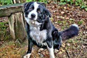 Dog Training: Benefits & Tips