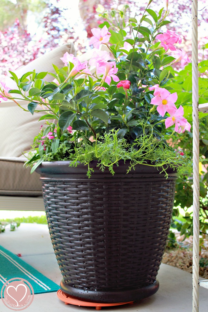 Your garden center online. Easy-care plants delivered to your door, anywhere in the USA. Indoor houseplants and locally-made pots. NYC plant care workshops.