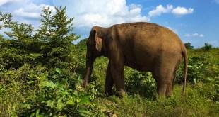 Sri Lanka 2015 – Horton Plains et Uda Walawe