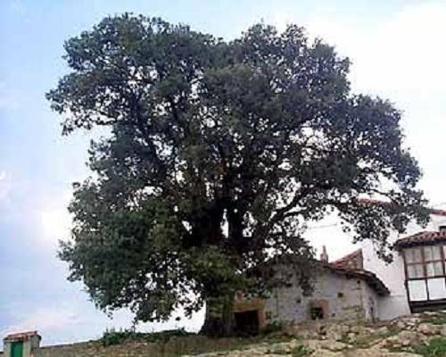 Cabanzón, la pequeña y bella villa de la Encinona