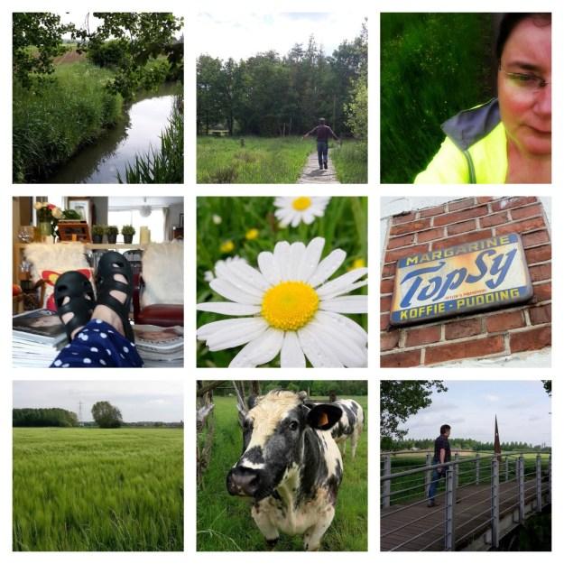 snapshot diary week 20