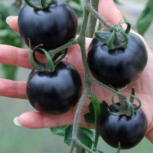zwarte-tomaten