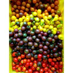 Small Crop Of Black Cherry Tomato