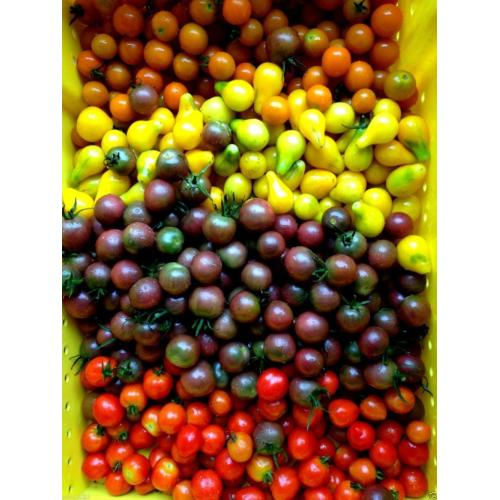 Medium Crop Of Black Cherry Tomato