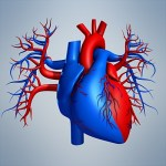 000-3d-model-Heart_01_Small