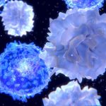 insulin_nation_do_you_need_more_tcells_shutterstock_439844257_945px-825x510