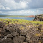 Galapagos Cruise - Hike around South Plazas Island