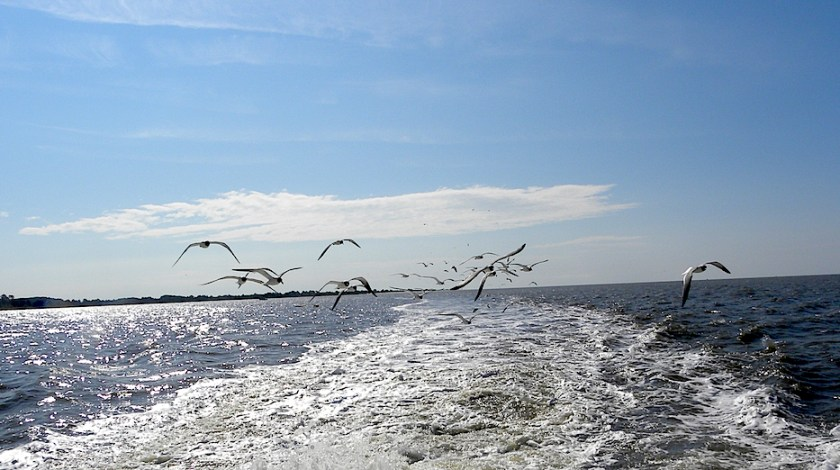 Birds chase a fishing boat.